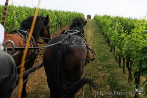 Photo of the Day: Through the Vineyards