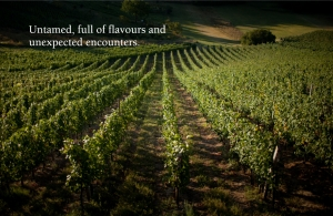 Plešivica Winemakers Need Not Export Wines but Bring the World to Them